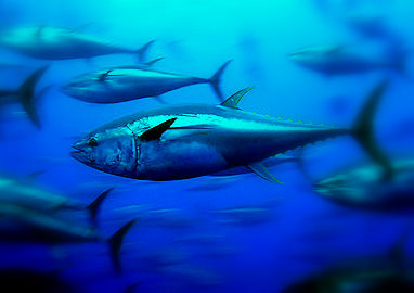 Cuatro millones de euros en subvenciones a la transformación y comercialización pesquera y acuícola