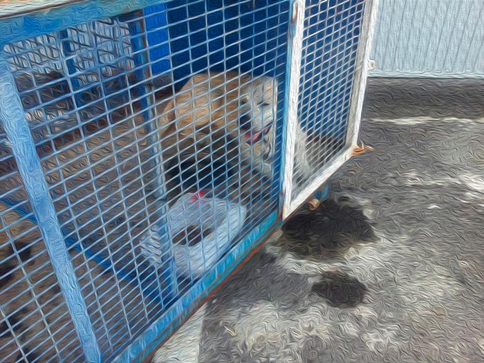 CC Adeje presenta moción sobre la perrera municipal