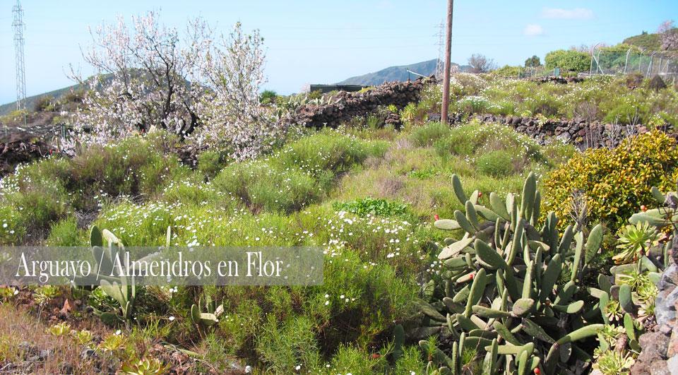 Almendros-en-flor-zona-ArguayoEDIT