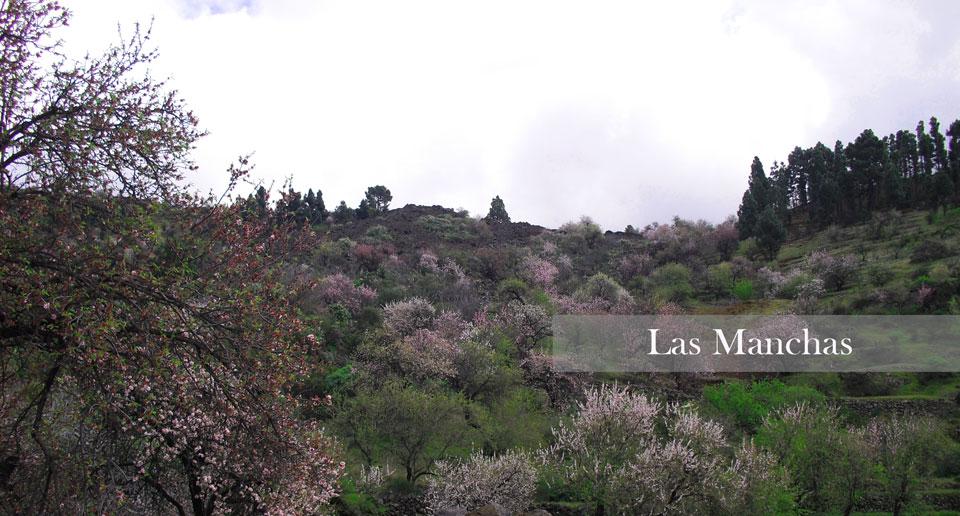Almendros-en-flor,-zona-Las-ManchasEDIT